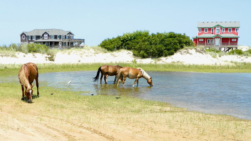 Did you know some of the best beaches in the east coast allow horses?
