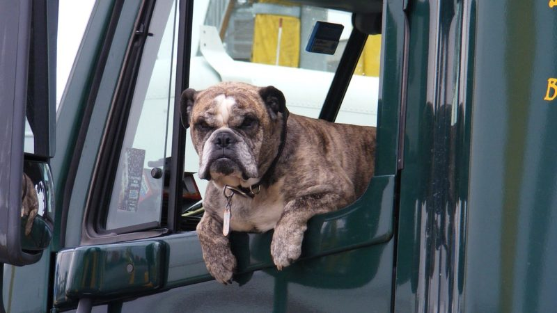 Taking a road trip with a dog or other pet can be fun. Just follow our tips!