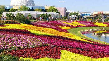 Beautiful flowers await at the Epcot International Flower and Garden festival.