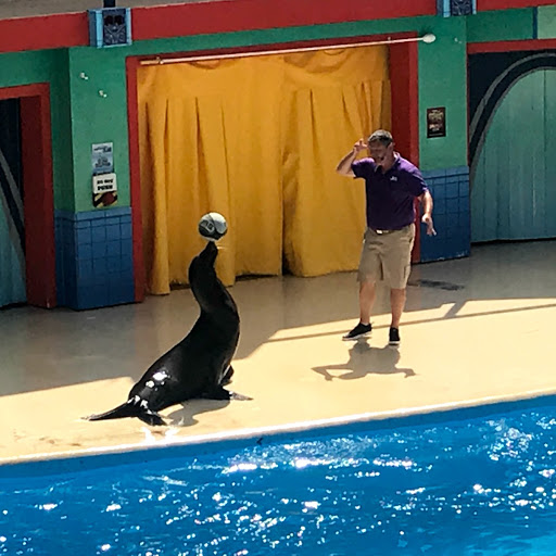 Check out the shows when you visit Sea World San Antonio. Photo Credit: Bonita Hall/Luggage&Strollers