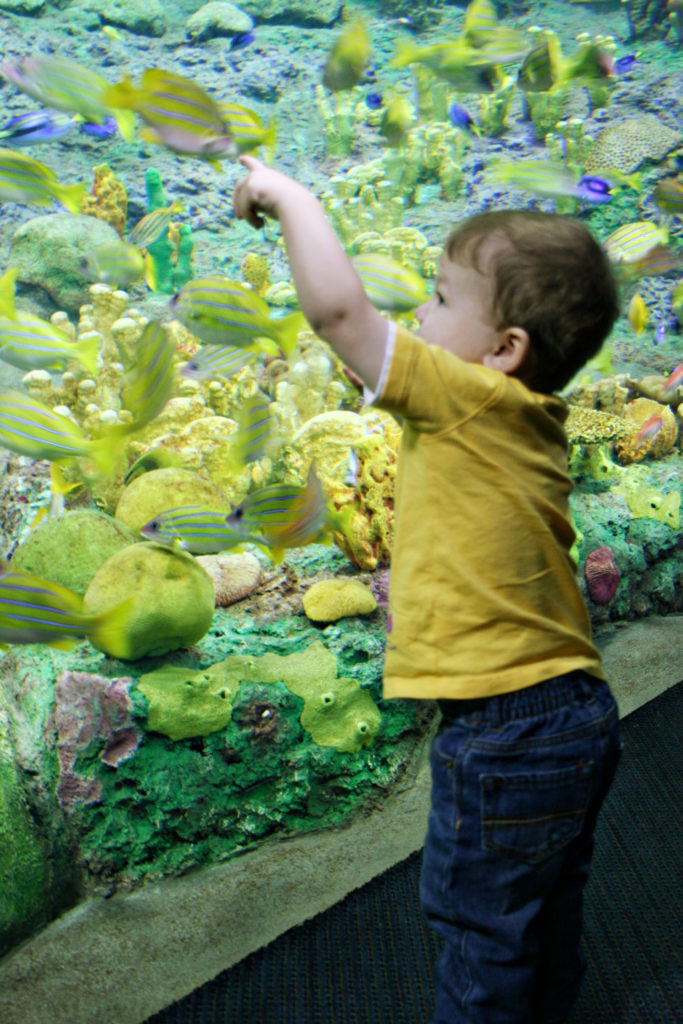 Toddler boy at an aquarium - TravelingMom