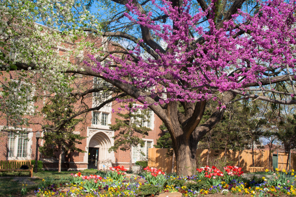 University of Oklahoma in Norman OK in the springtime.