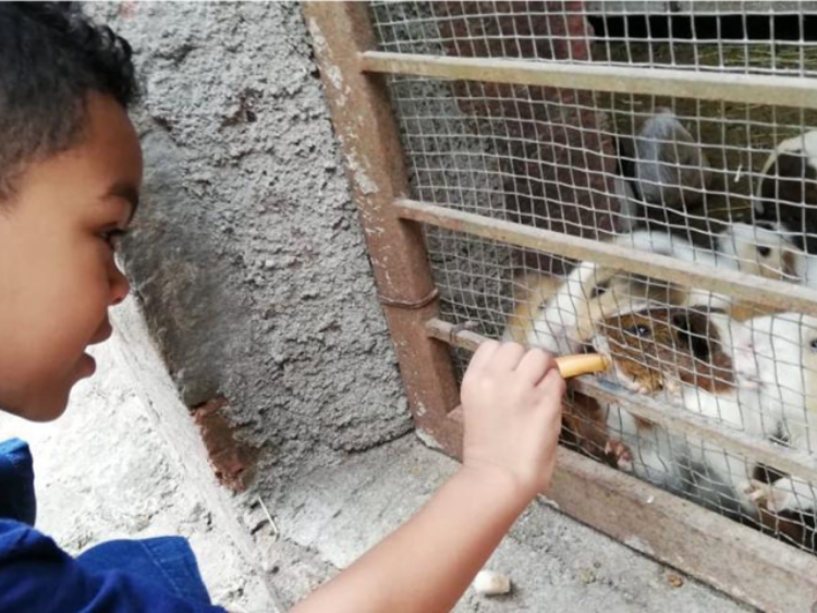 Child feeds guinea pigs at zoo