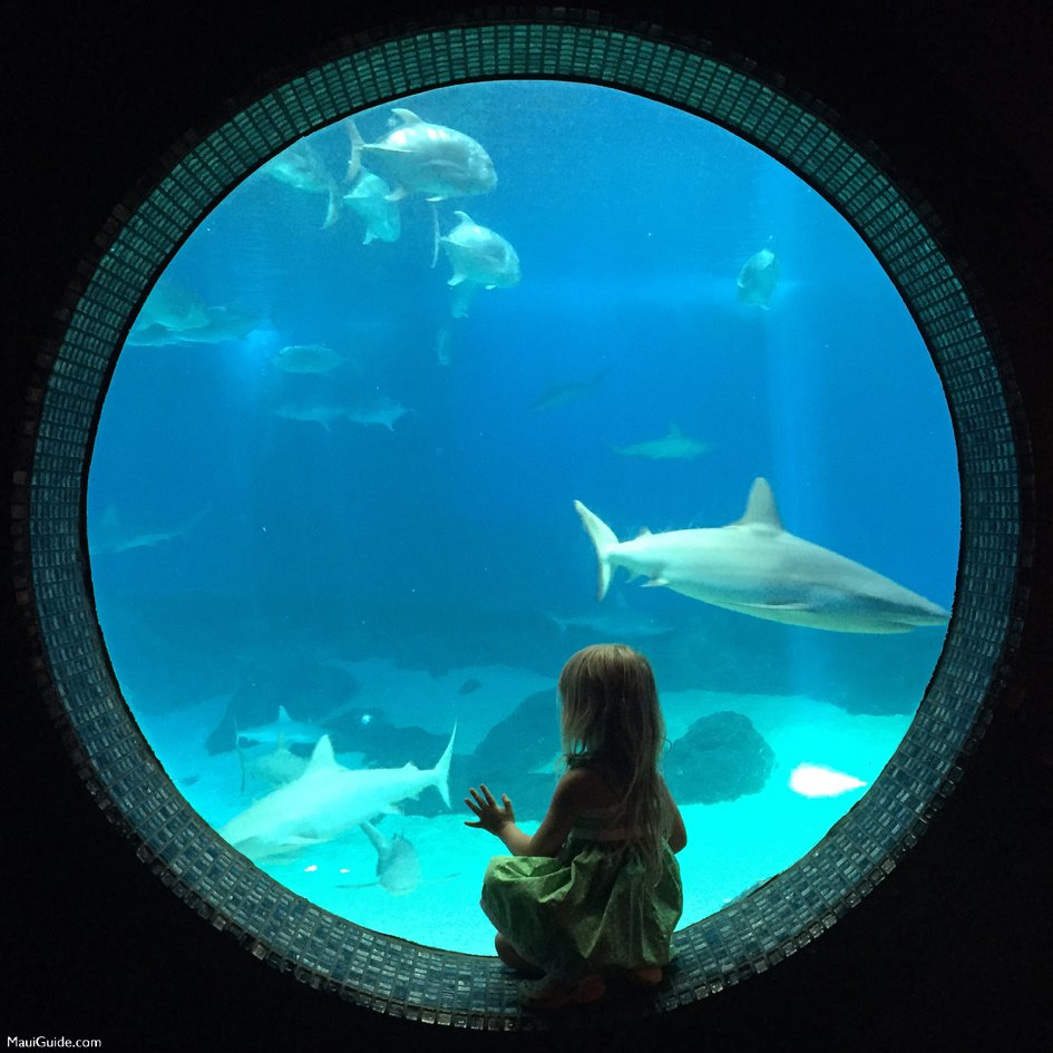 See the sharks when your visiting Maui with kids.