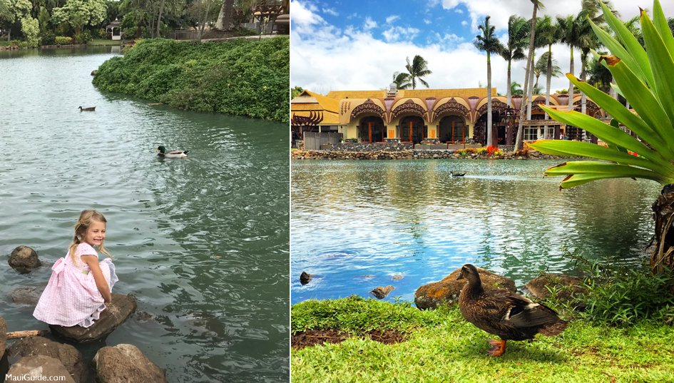 When visiting Maui with kids go and feed the ducks.