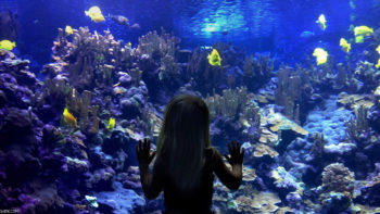 Kids love the Maui aquarium.