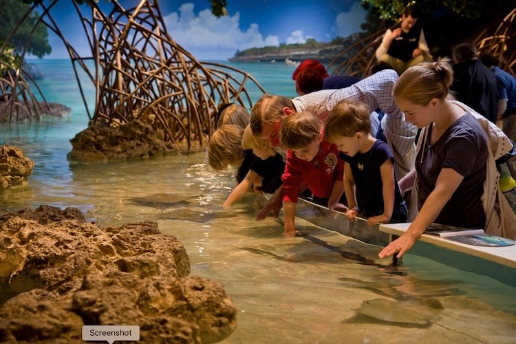 A favorite activity at the New England Aquarium, one of Boston's museums for kids, is petting the rays and sharks in the touch tank like these families