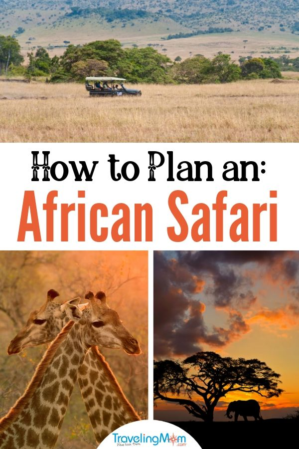 How to plan a family African Safari. These 6 tips will help you have one of the most memorable and treasured experiences of your life.