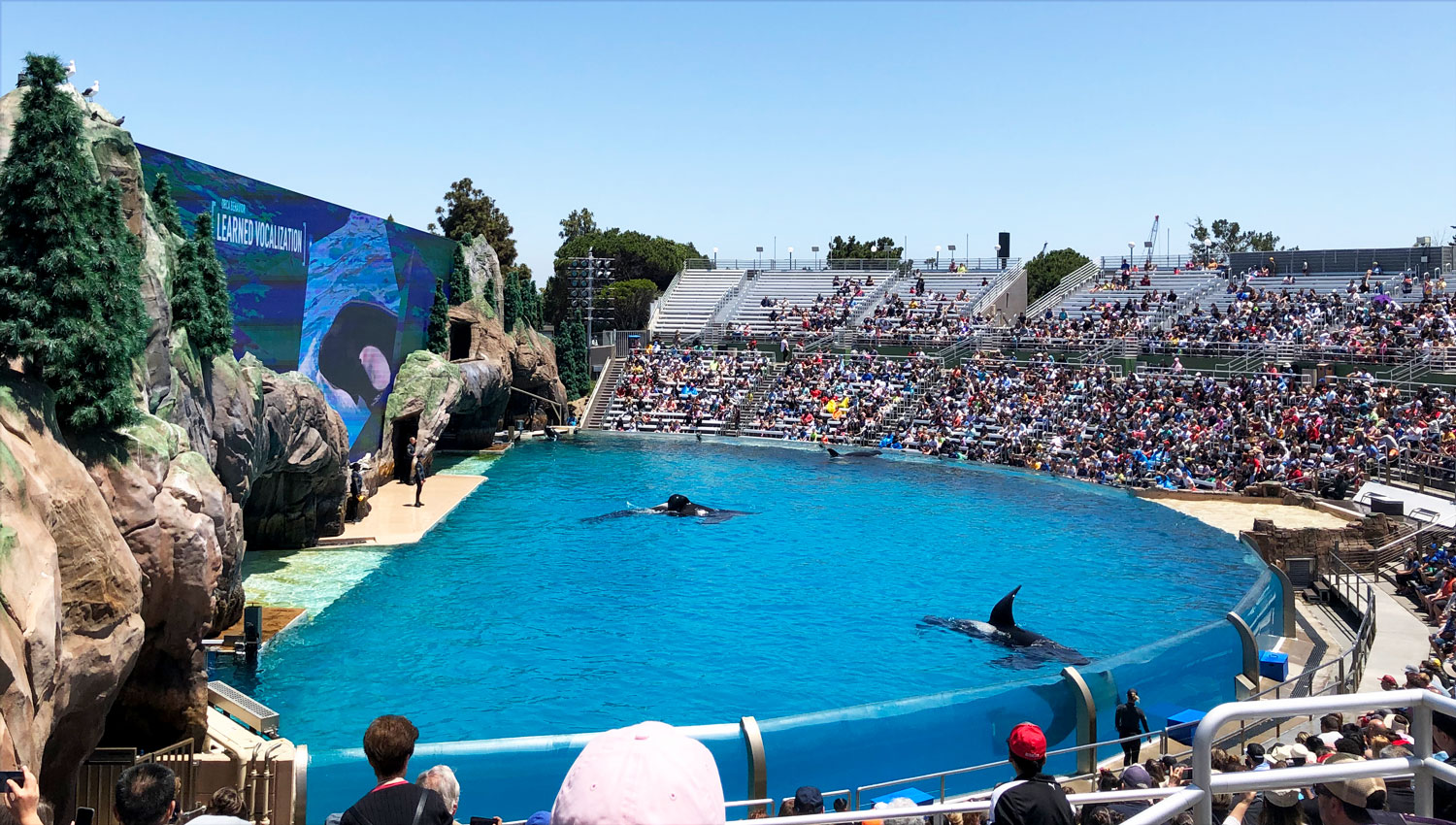 Learn about sea life and orcas at Sea World San Diego
