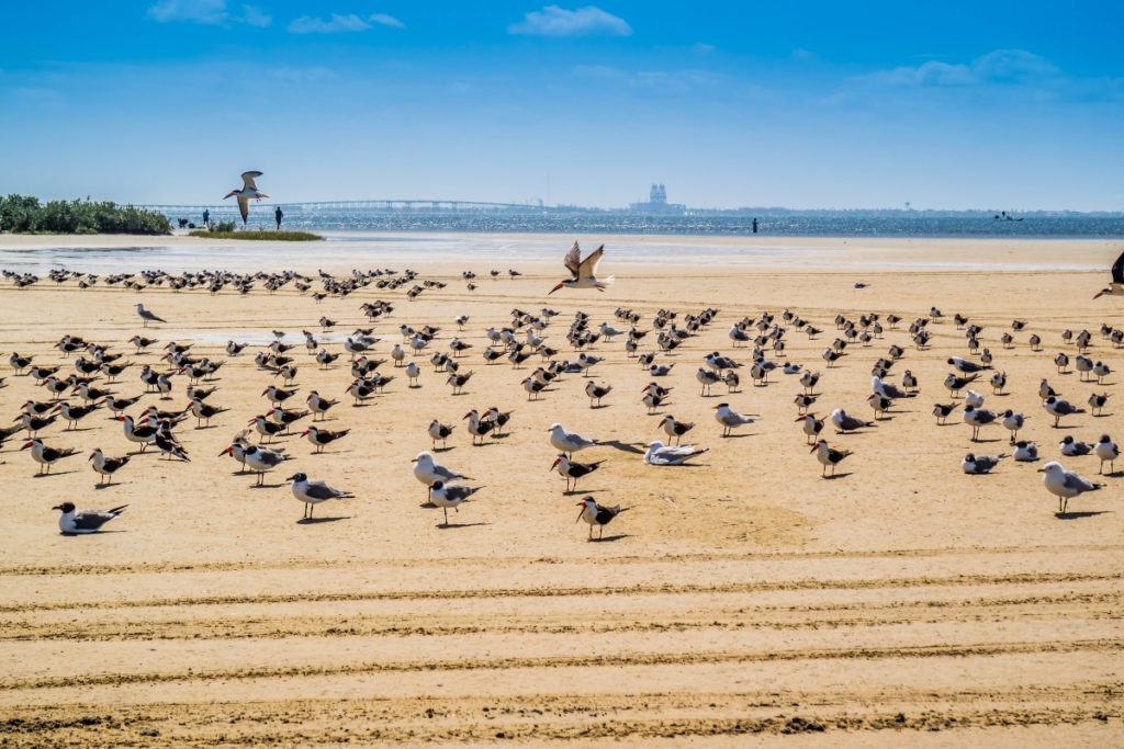 South Padre Island is one of the nicest beach in Texas.