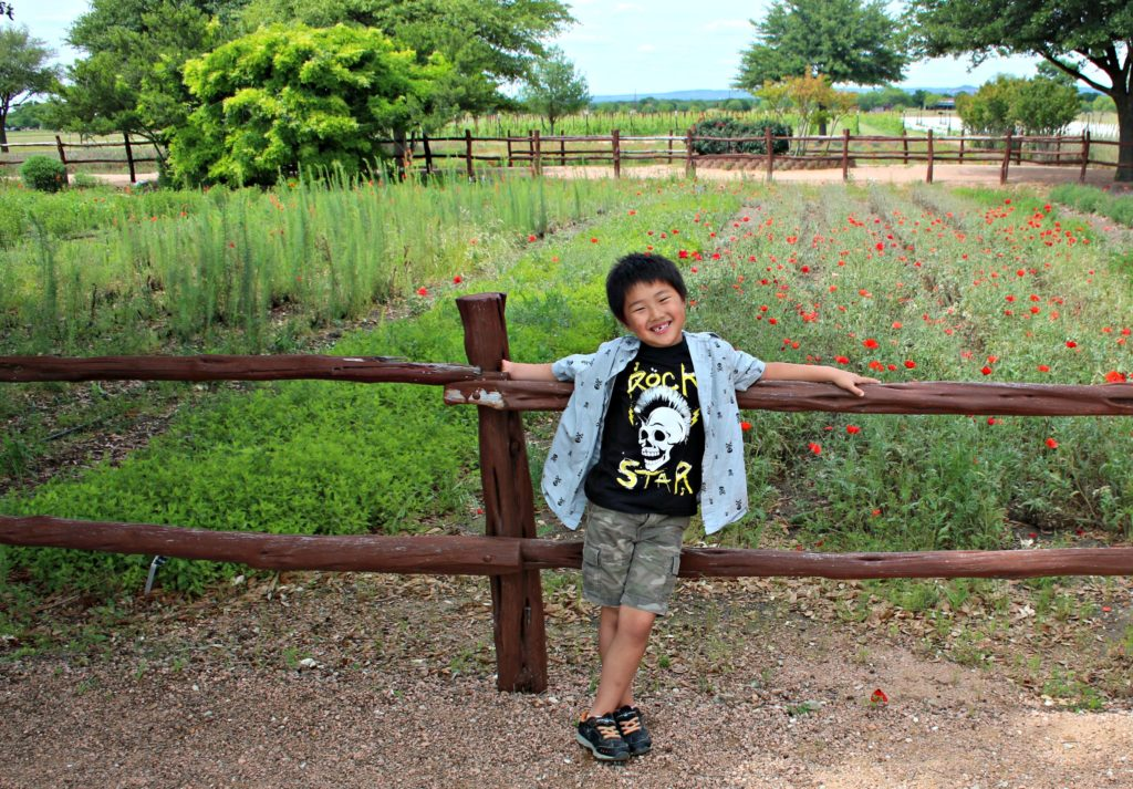 Want a day trips suggestions departing out of Austin? Check out Wildseed Farms in Fredericksburg