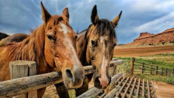 Horses at one of kind Wyoming dude ranch - Red Reflet Ranch.