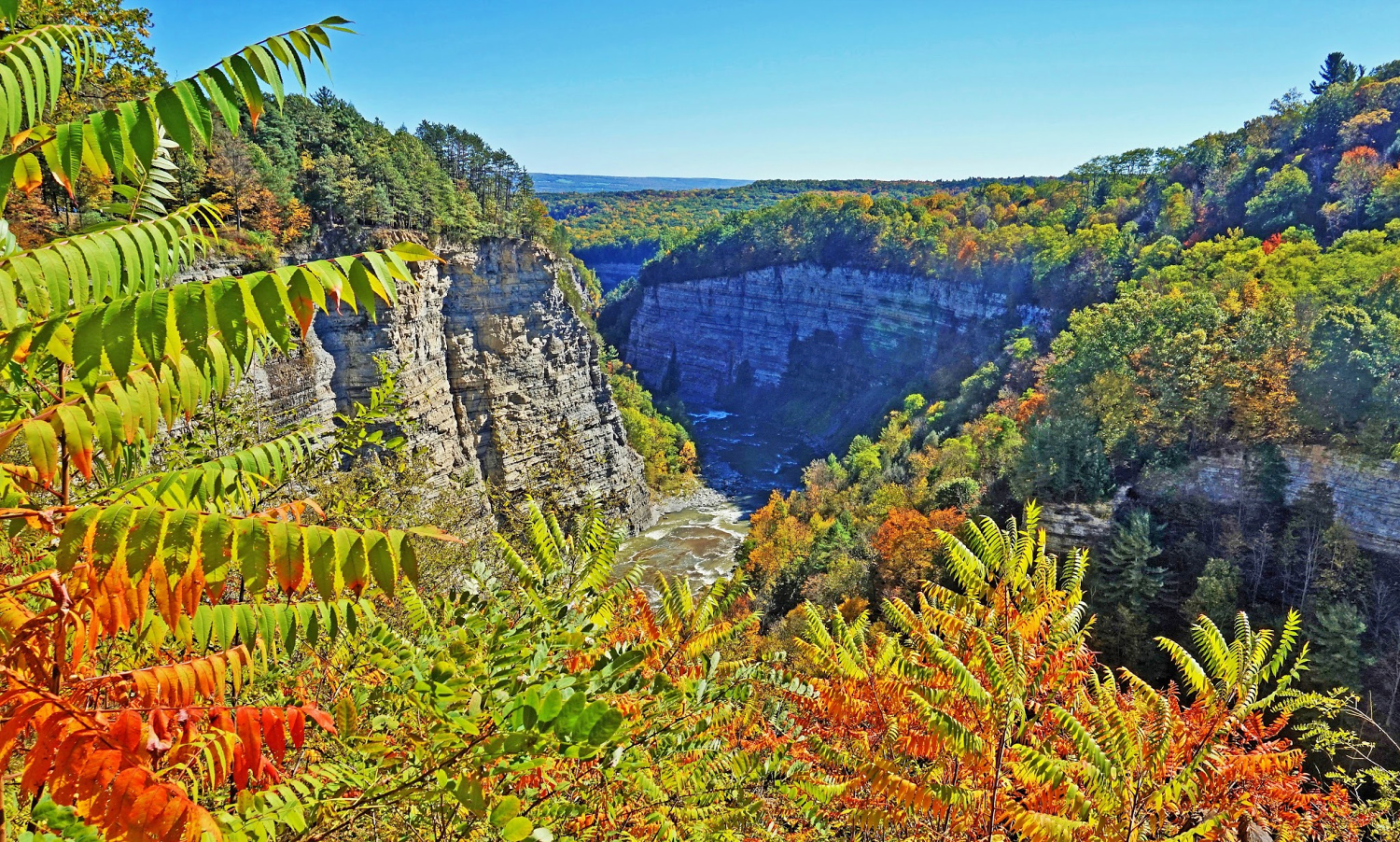 Beautiful foliage at Letchworth State Park.