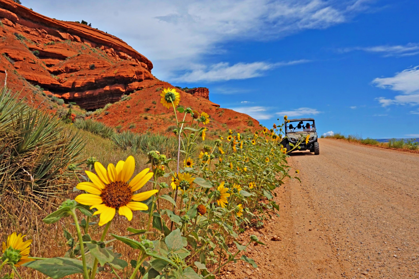 Wild West vacation. Sunflowers along a dirt road at Red Reflet Ranch in Wyoming.