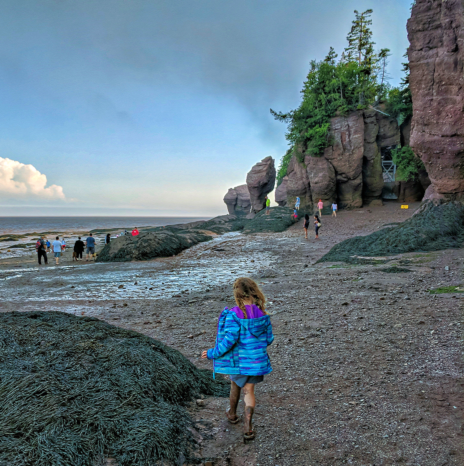Maritime Canada. Hopewell Rocks Park in the Bay of Fund. Little girl walking on the ocean floor.