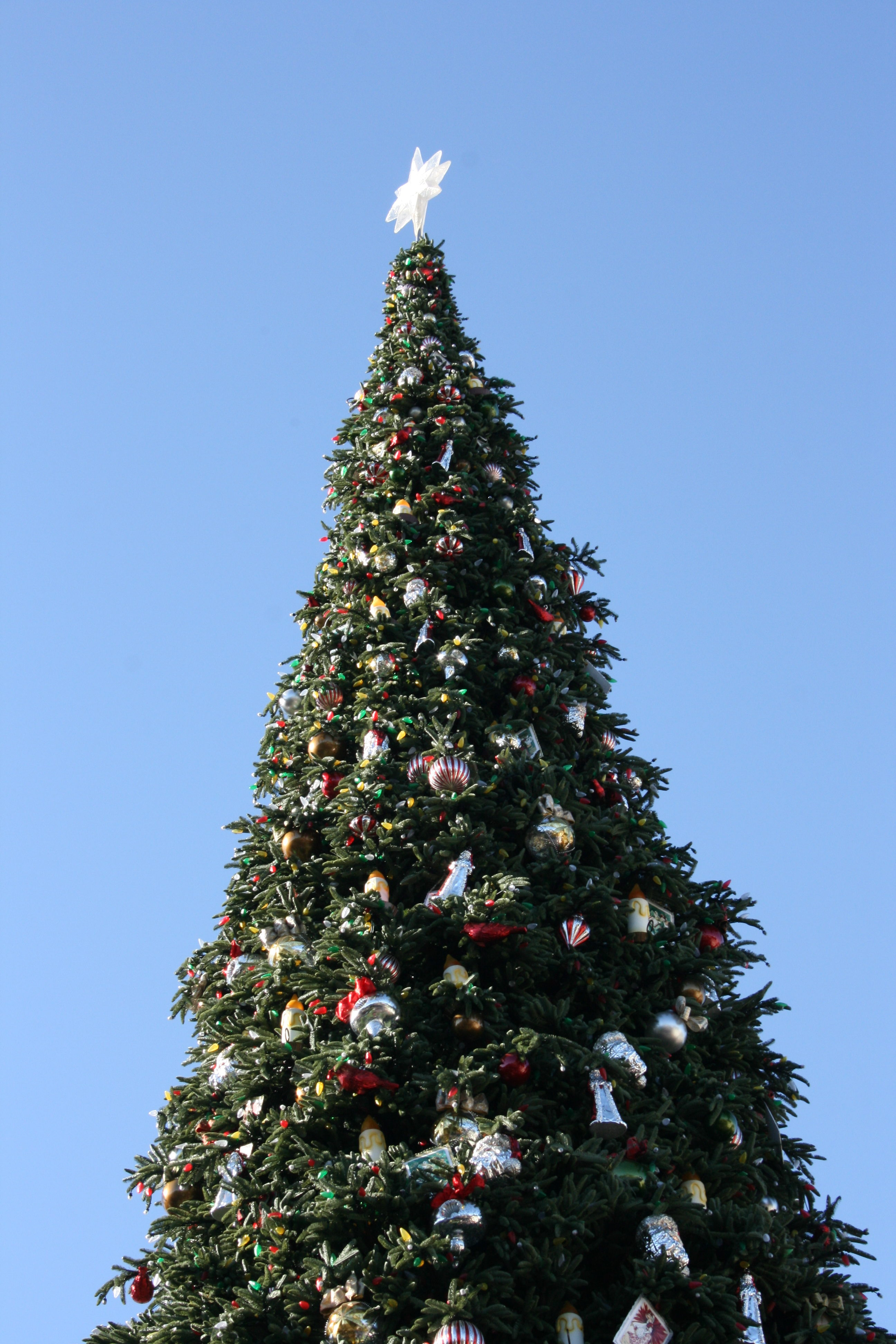 Top of Christmas tree at Disneyland Main Street
