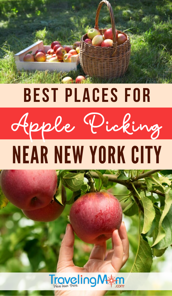 Apple picking is great fall fun and these are the best places to visit near New York City. Check out our list of family-friendly farms and orchards in areas including Long Island, Hudson River Valley and New Jersey that offer apple picking and other fall activities. #TMOM #FallTravel #NewYork #ApplePicking | TravelingMom | Autumn