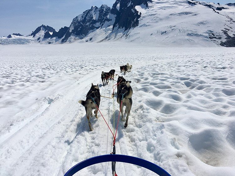 Out on the trail dog sledding in Alaska.