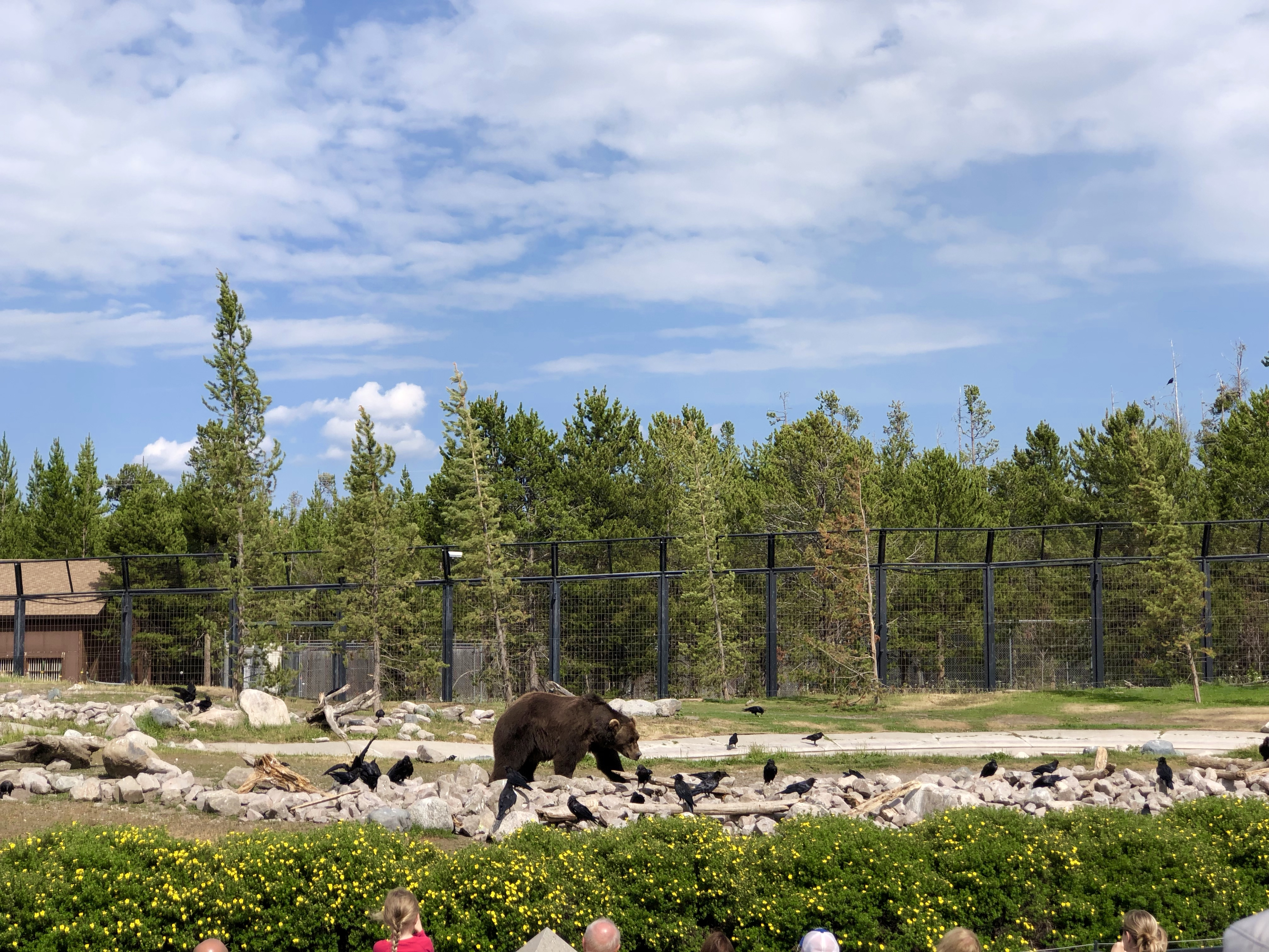 Things to do near Yellowstone include museums, hiking, more.