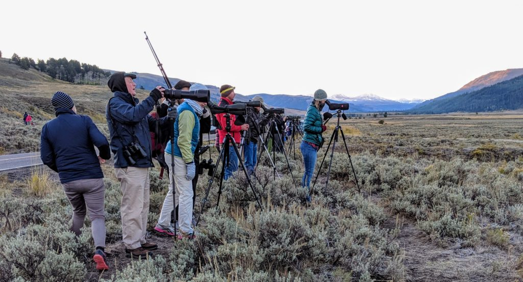 crowd of people wearing jackets with photography gear stopped to see bears in Yellowstone National Park