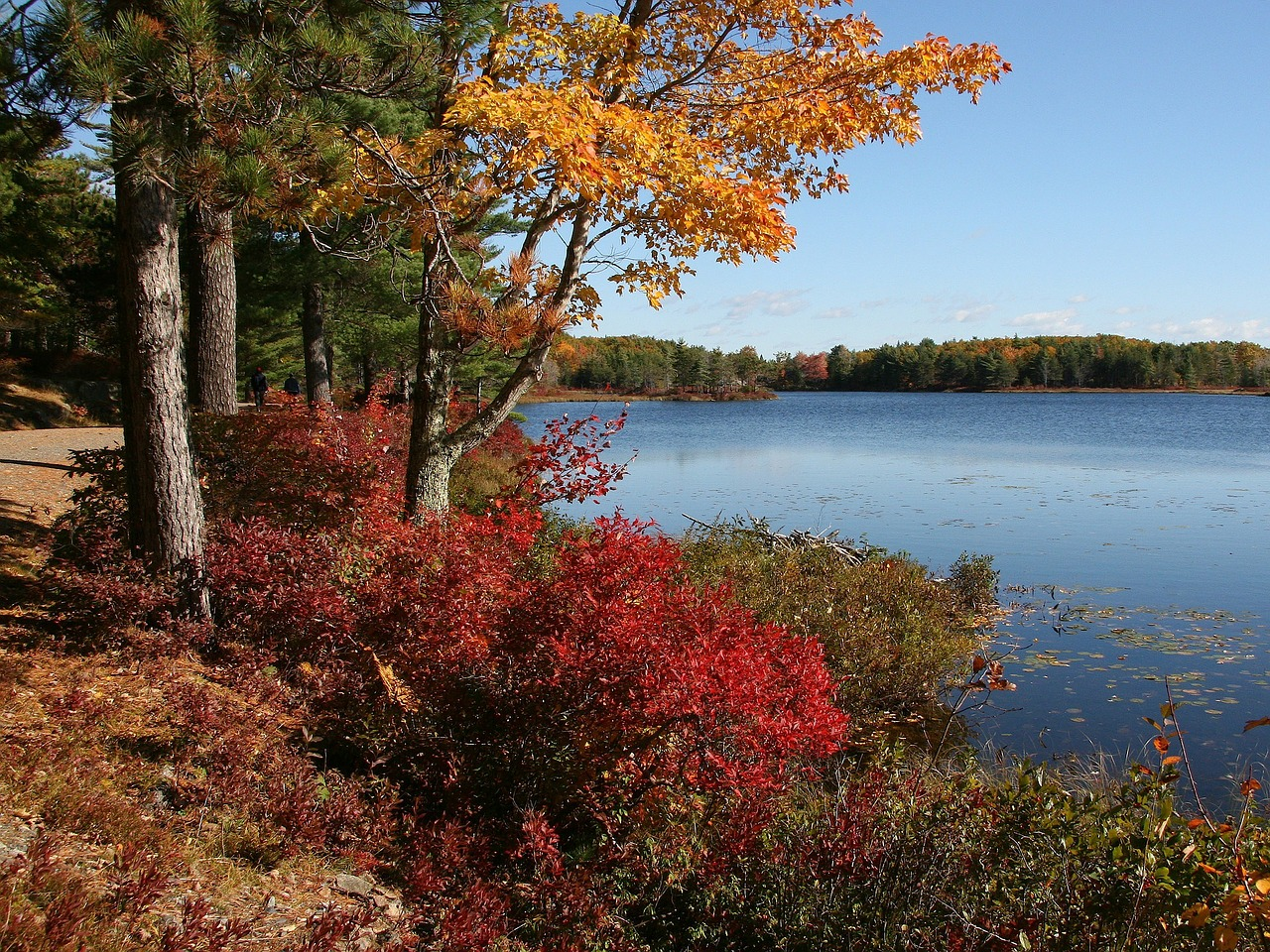 Where to See the Best Fall Colors in the Northeast USA