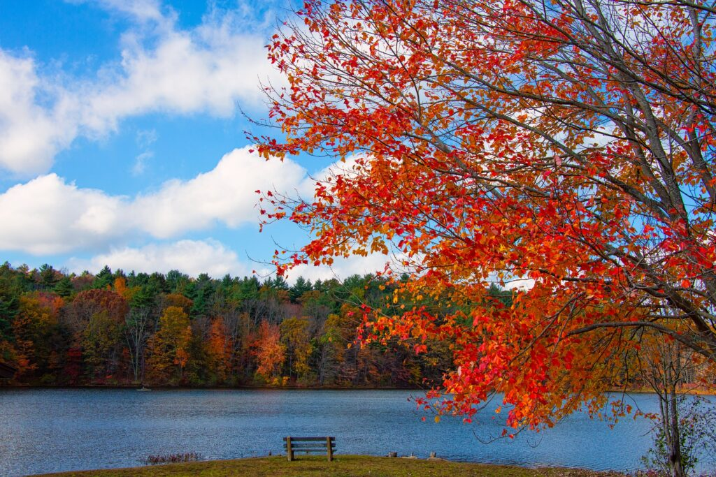 Fall foliage in Massachusetts; fall colors northeast a gorgeous red orange maple tree is seen against a backdrop of a lake with puffy white clouds in the sky and an empty bench is in the foreground