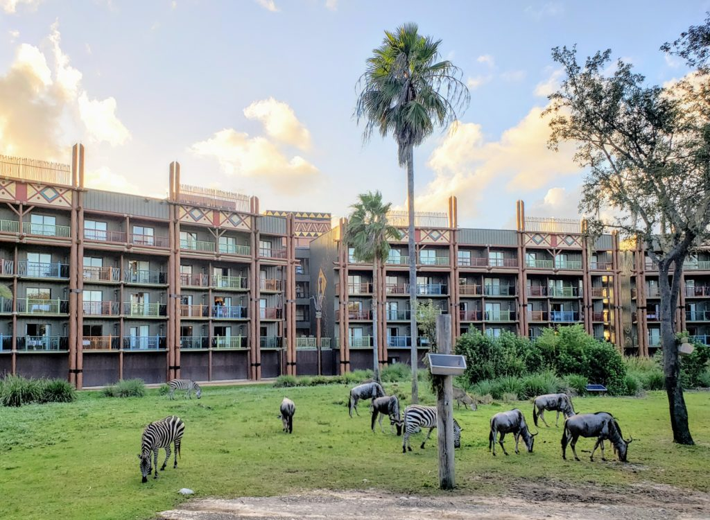 Zebras grazing in the savanna at Disney Animal Kingdom Lodge, one of the best Florida resorts for families