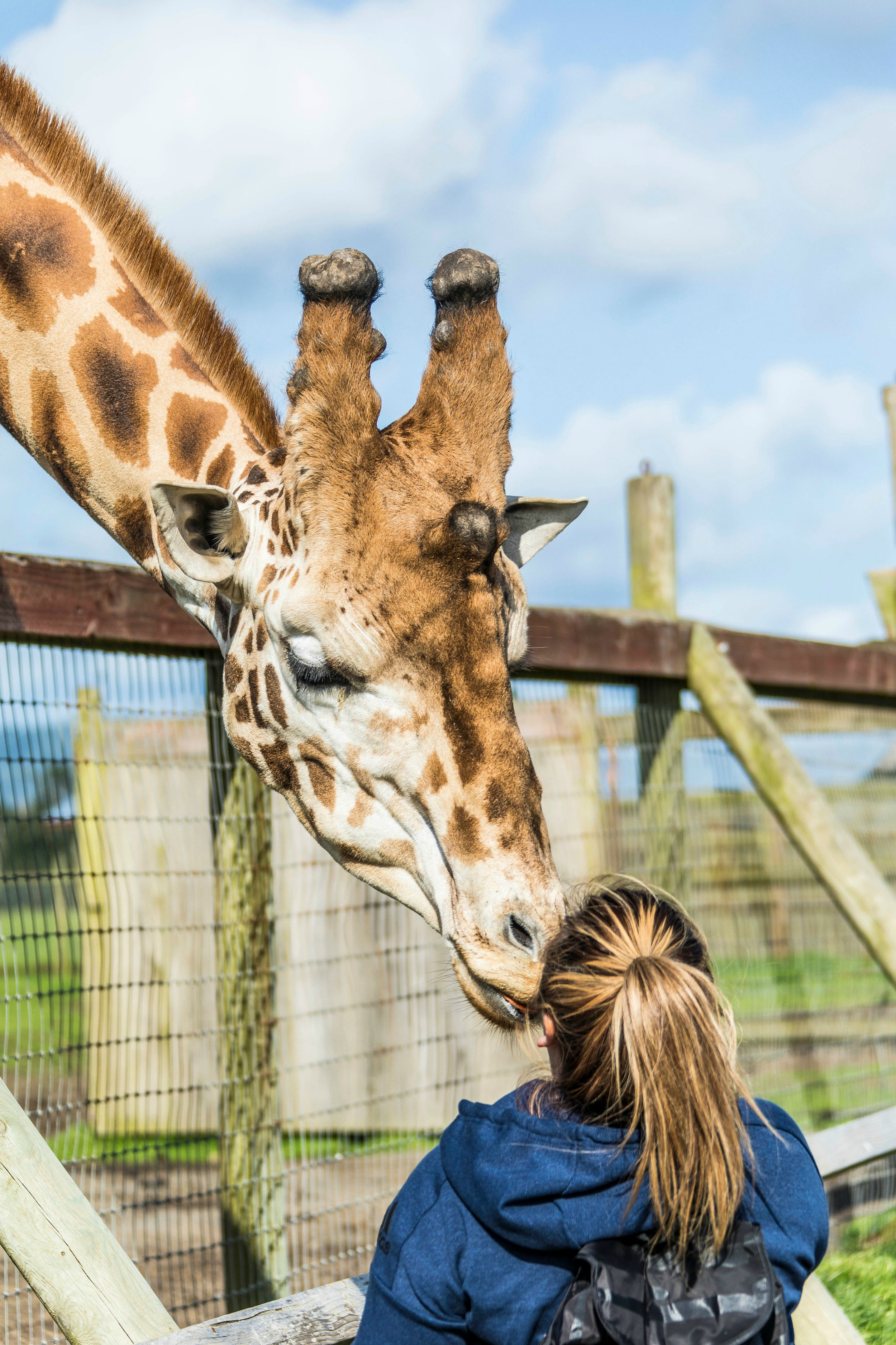 Feed giraffes at the B Ryan Preserve along the Mendocino coast.