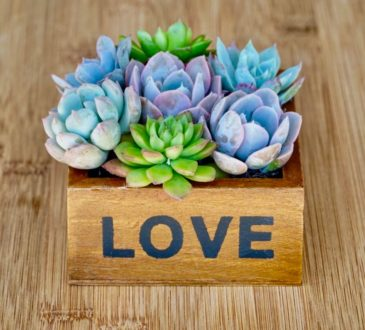 This pretty succulent plant arrangements makes a great gift for women.