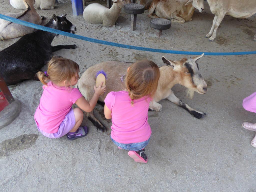 Heading to Animal Kingdom with toddlers? Be sure to check out the Affection Section where your kiddos can brush goats and check out some other creatures.