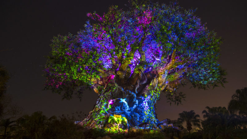 The Tree of Life at Animal Kingdom night show.