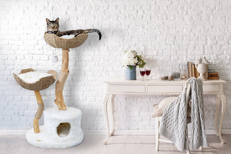 fancy cat climbing tree