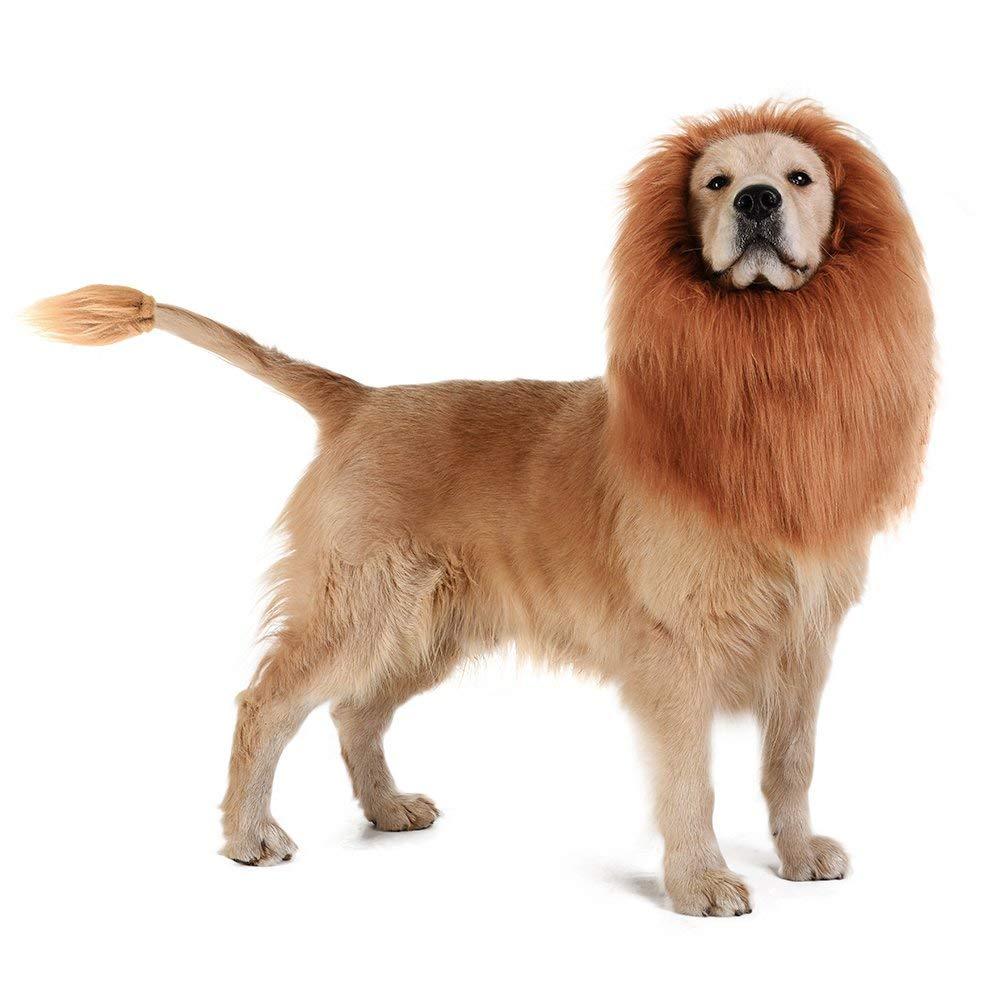 lion mane for dog