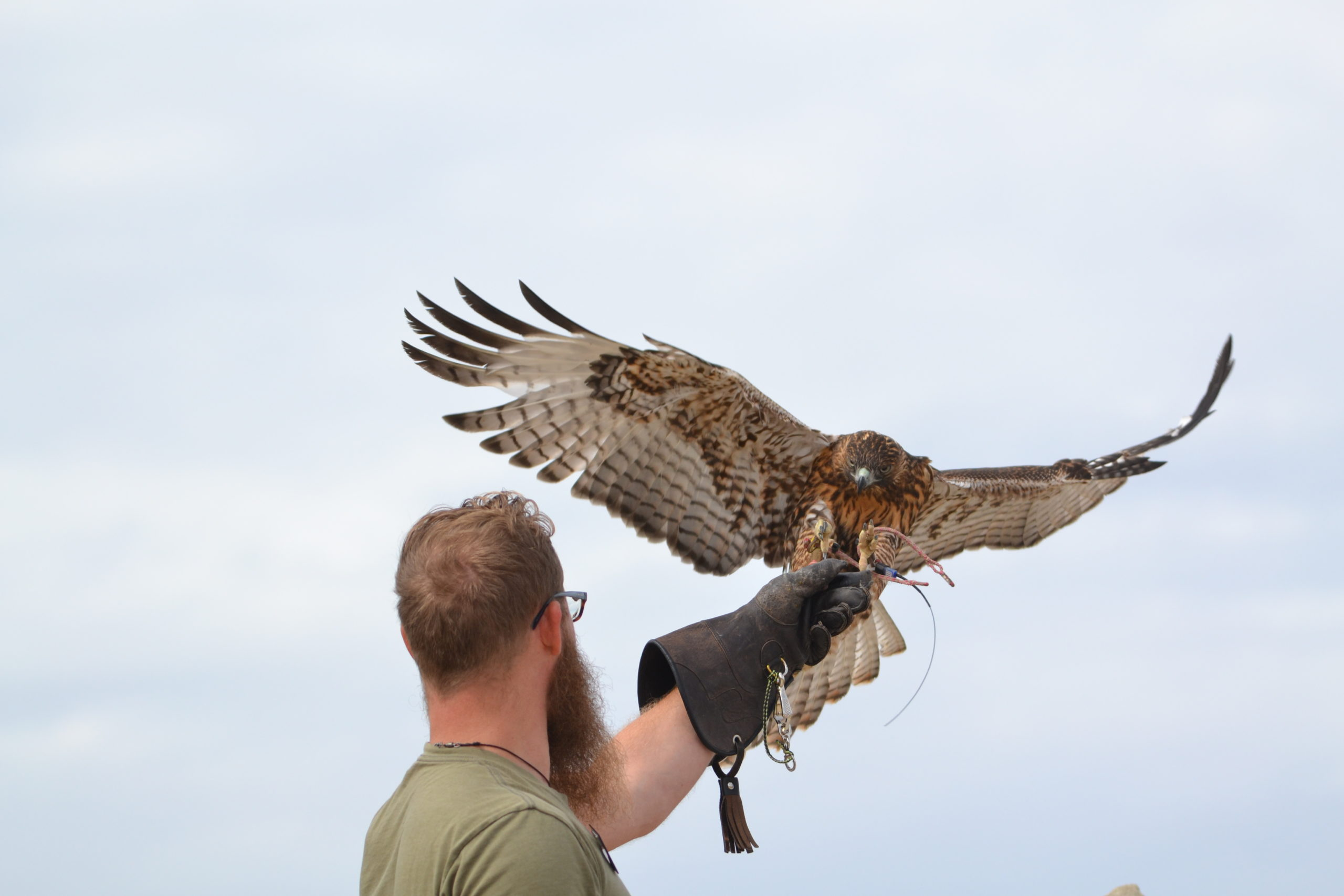 World Center Birds of Prey is one of many fun things to do in Boise.