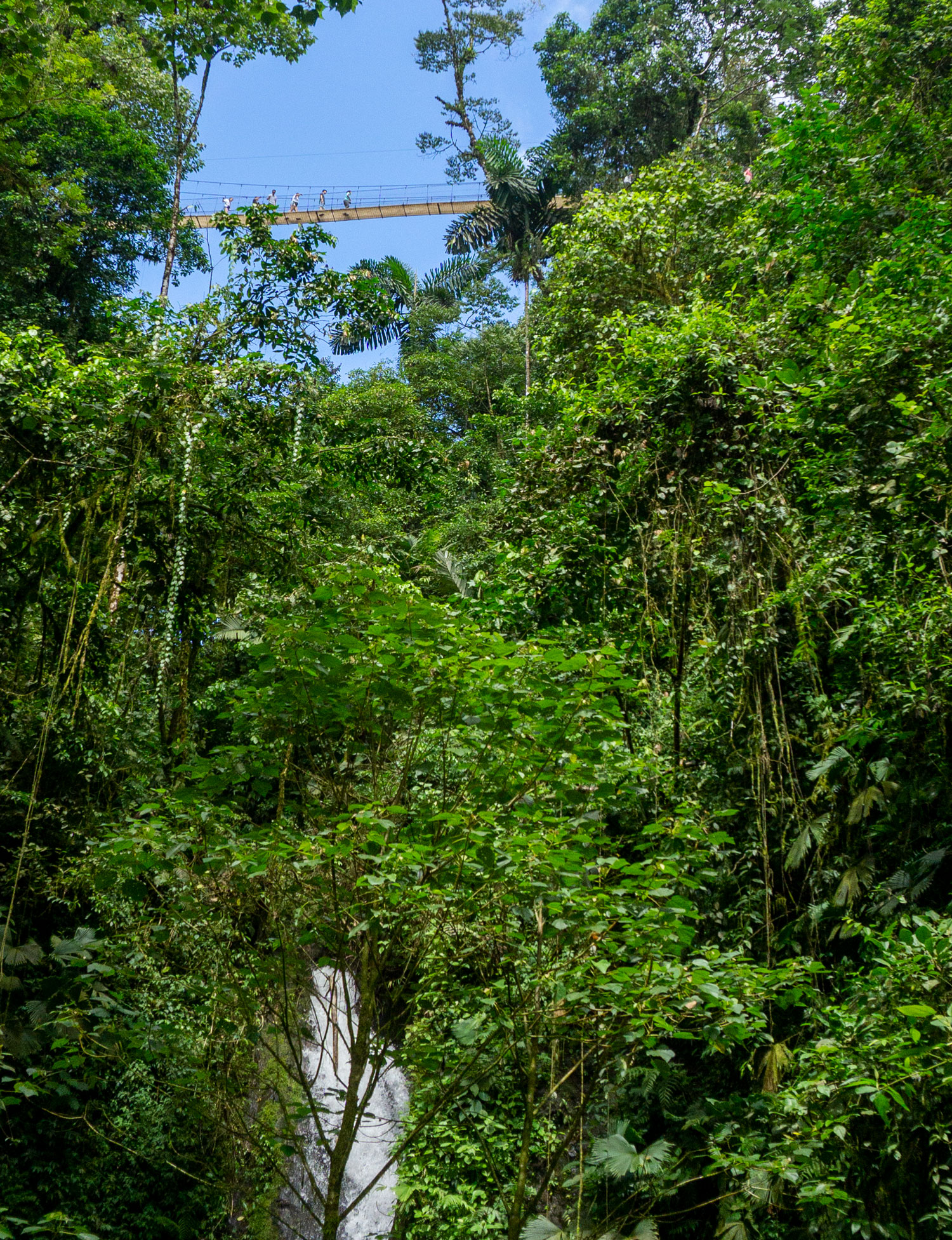 Mistico Hanging Bridges
