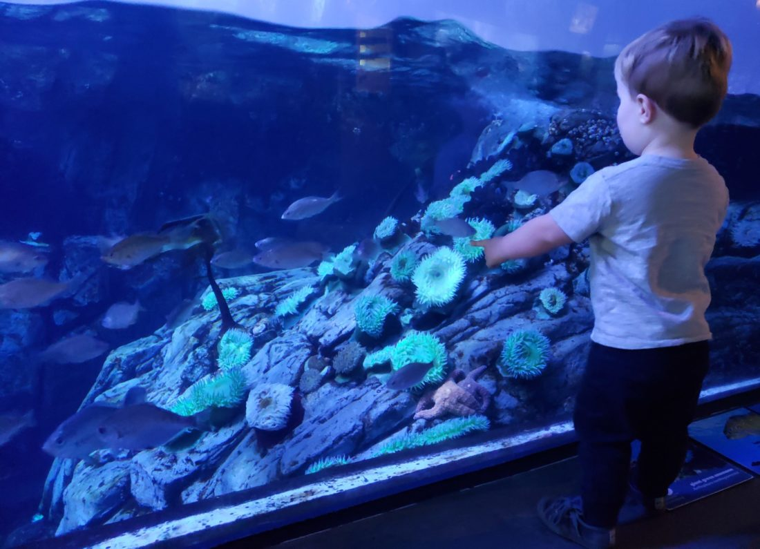 Child in front of a display at the Long Beach Aquarium - TravelingMom