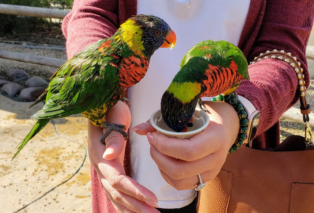 Two colorful birds at the Long Beach Aquarium of the Pacific - TravelingMom