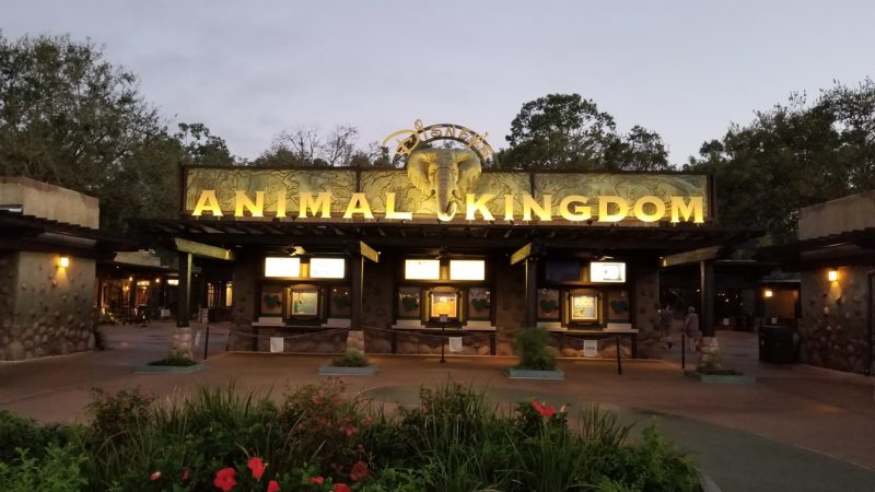 Beat the heat and the crowds by arriving early to Walt Disney World's Animal Kingdom.