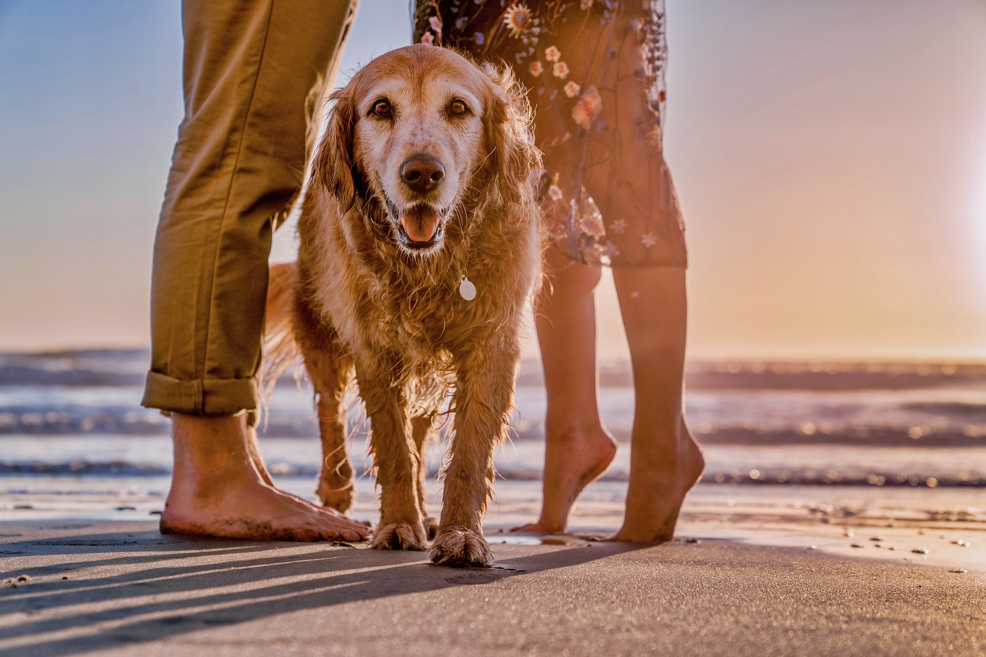 dog on the beach in between couple- check airline pet policies and bring your dog with you