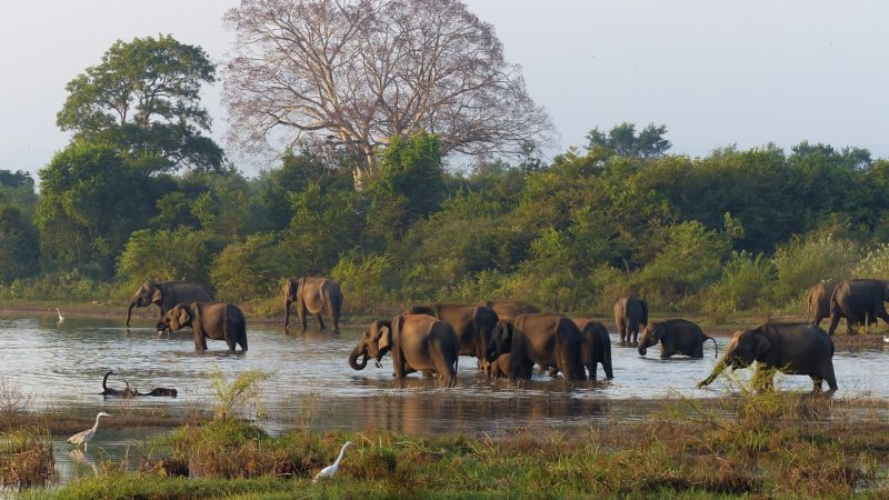 Wildlife watching is only one of the things to do in Sri Lanka