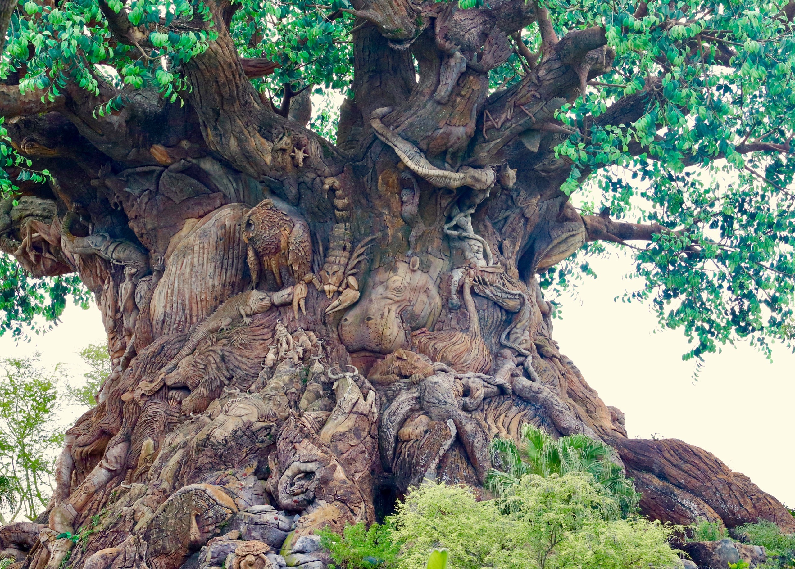 The tree of life in Animal Kingdom at Walt Disney World. Hundreds of animals are carved into a manufactured tree. There is a scorpion, hippopotamus, and owl, among many others.