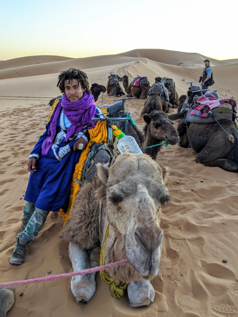Camels waiting for passengers to ride into the Sahara desert.