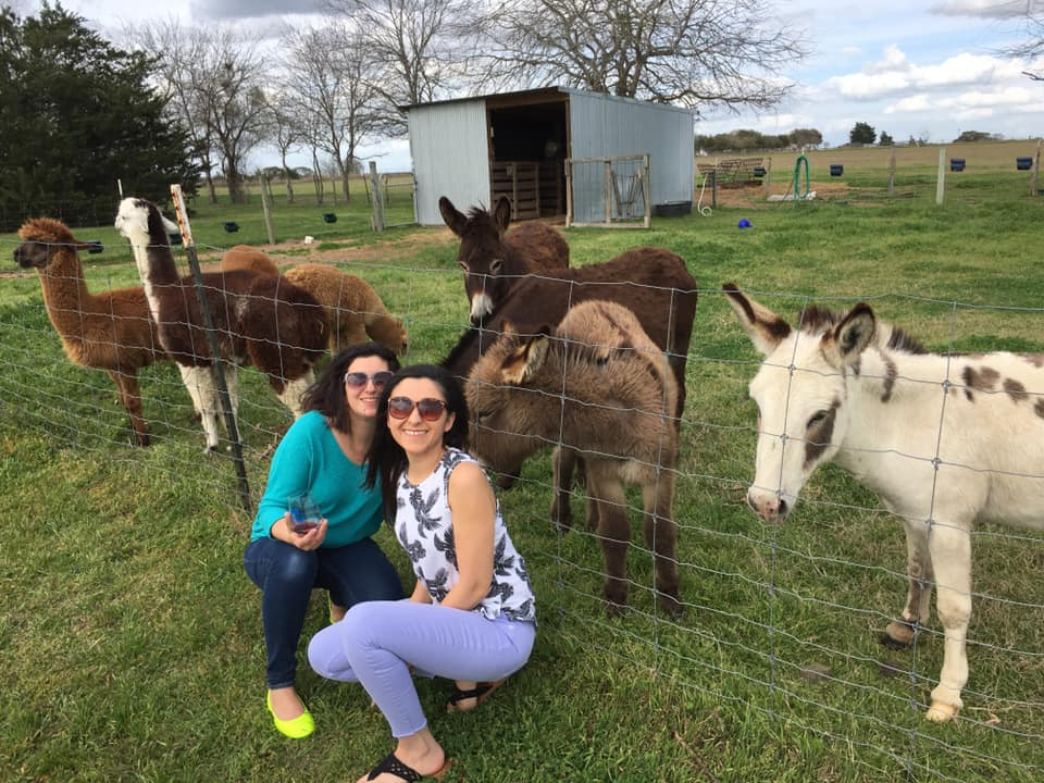 smiling women kneeling in front of llamas and donkeys at blue mule winery