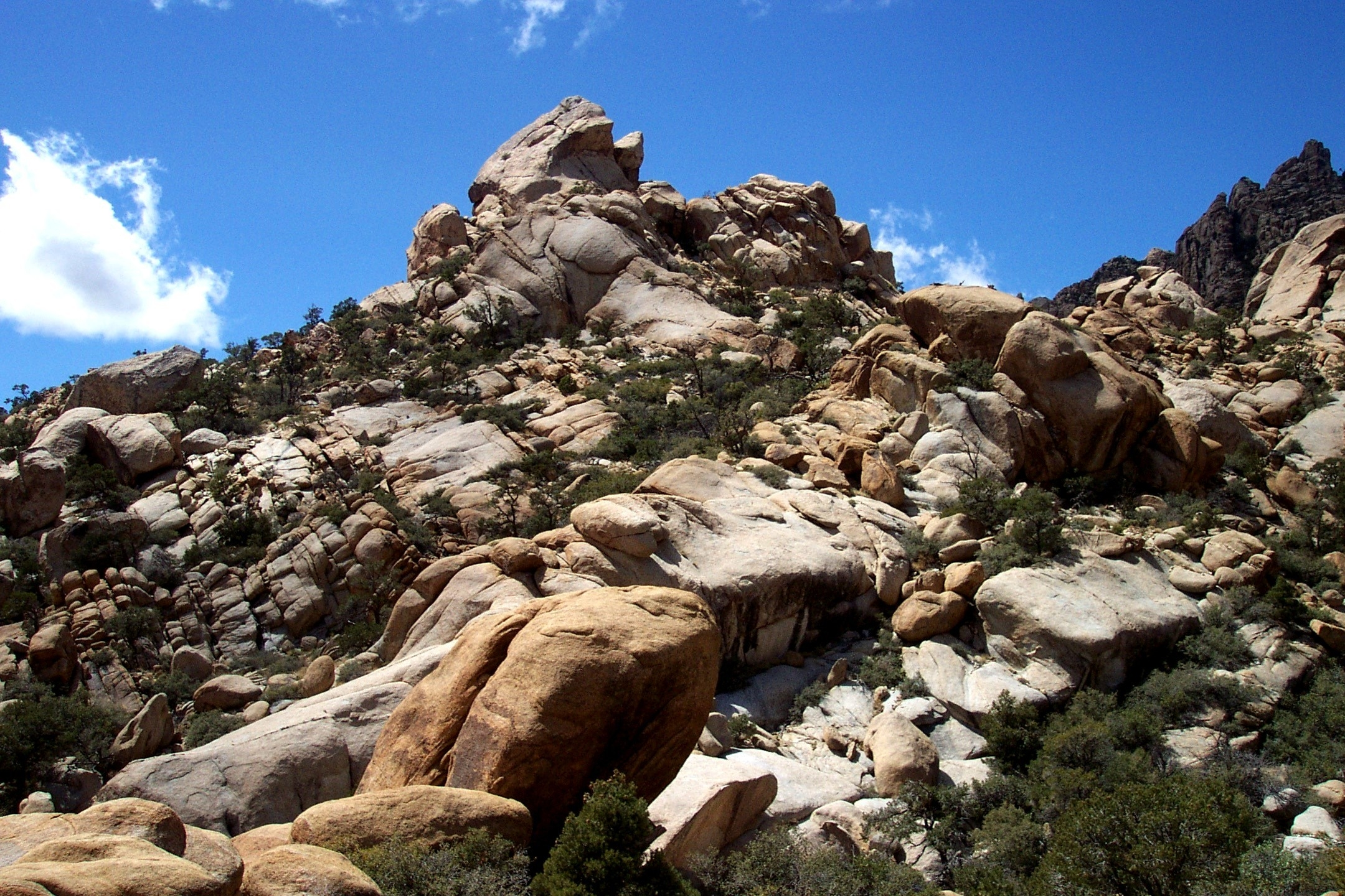 Caruther's Canyon in Mojave National Preserve