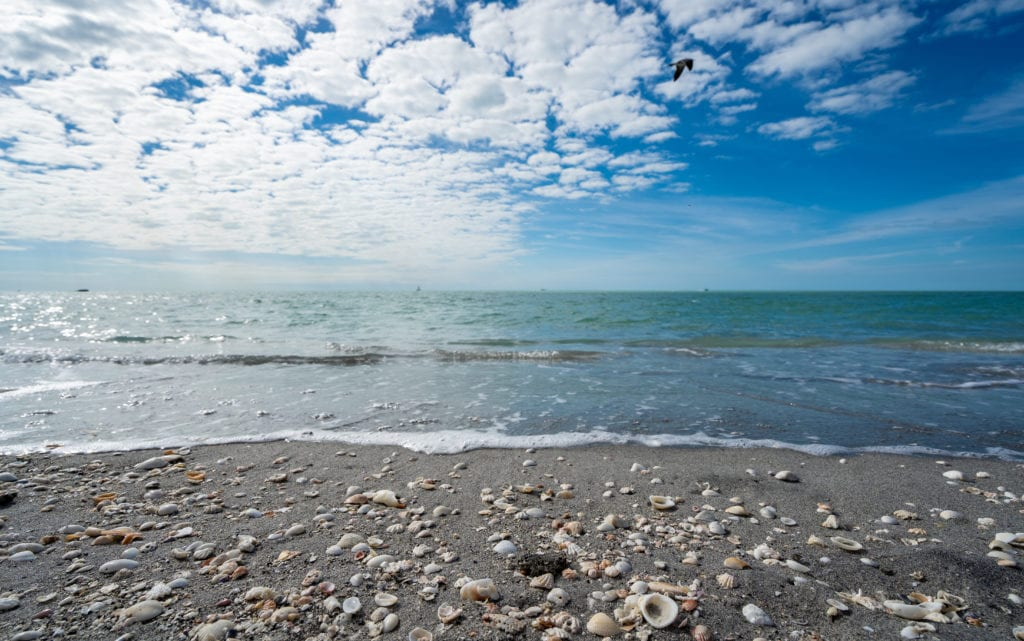 The beach in Sanibel Island covered with seashells, Florida vacation for families