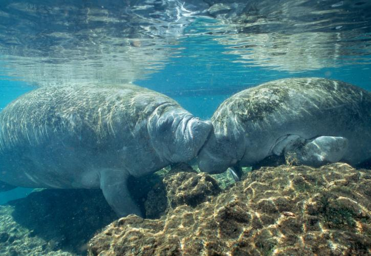 Exploring Florida's wildlife and seeing manatees from the Fish Bowl.