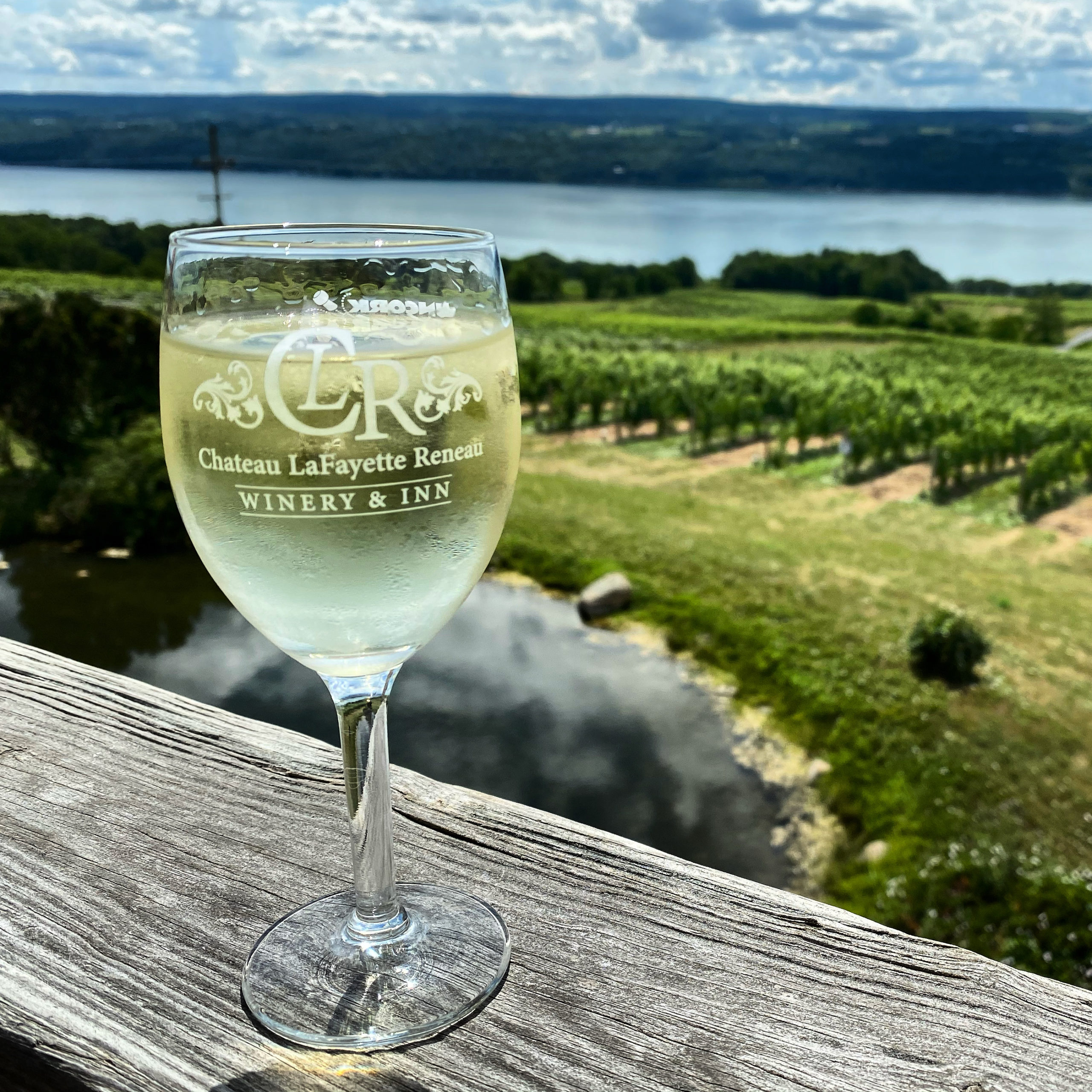 Watkins Glen vineyard view