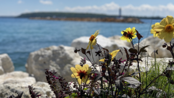 Viewing flowers and nature is one of many things to do on Mackinac Island.