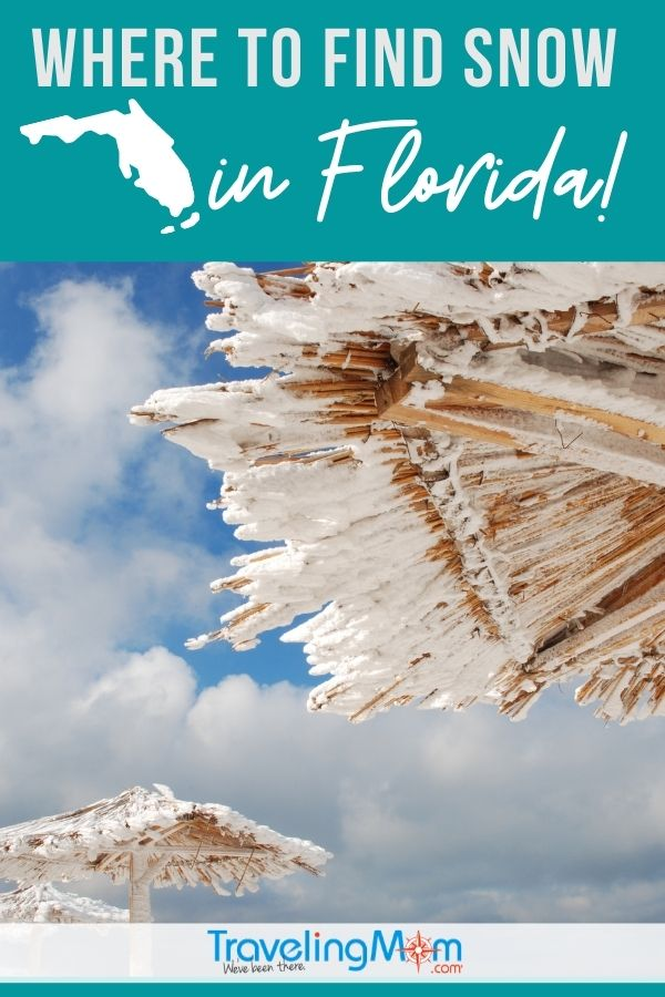 snow covered tropical branch umbrellas with words where to find snow in Florida written