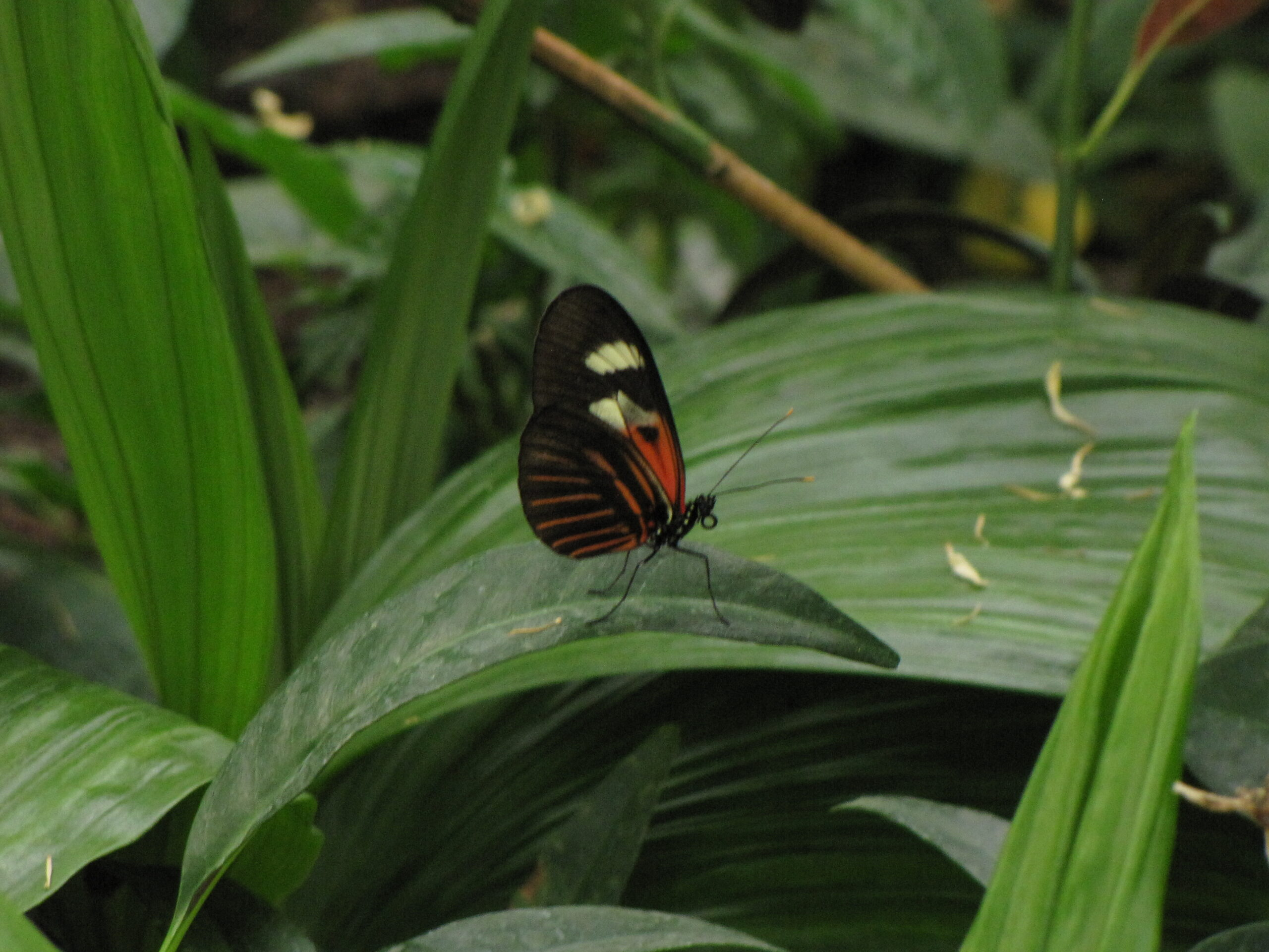 Butterflies are Blooming exhibit at Meijer Gardens